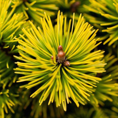 Produkcja i dystrybucja roślin